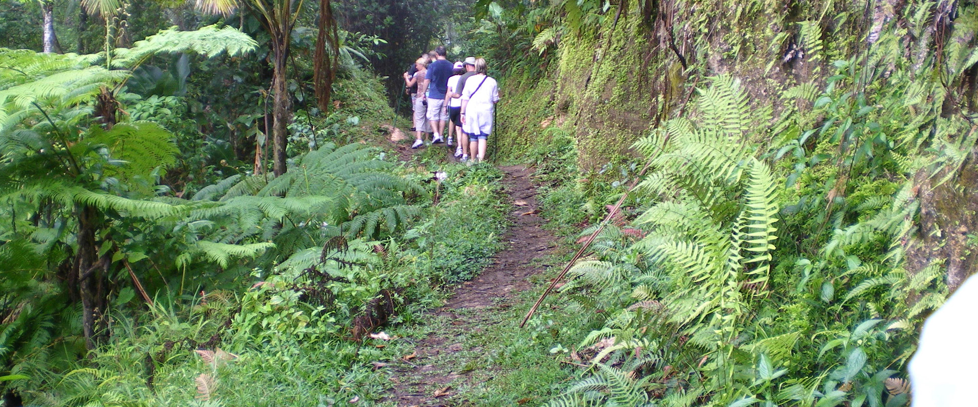 Group on Nature Hike Tour in St. Kitts and Nevis