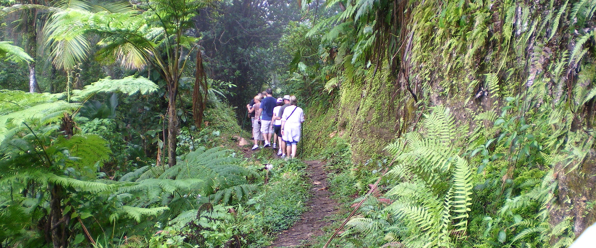 Nature Trail on Nevis Tour